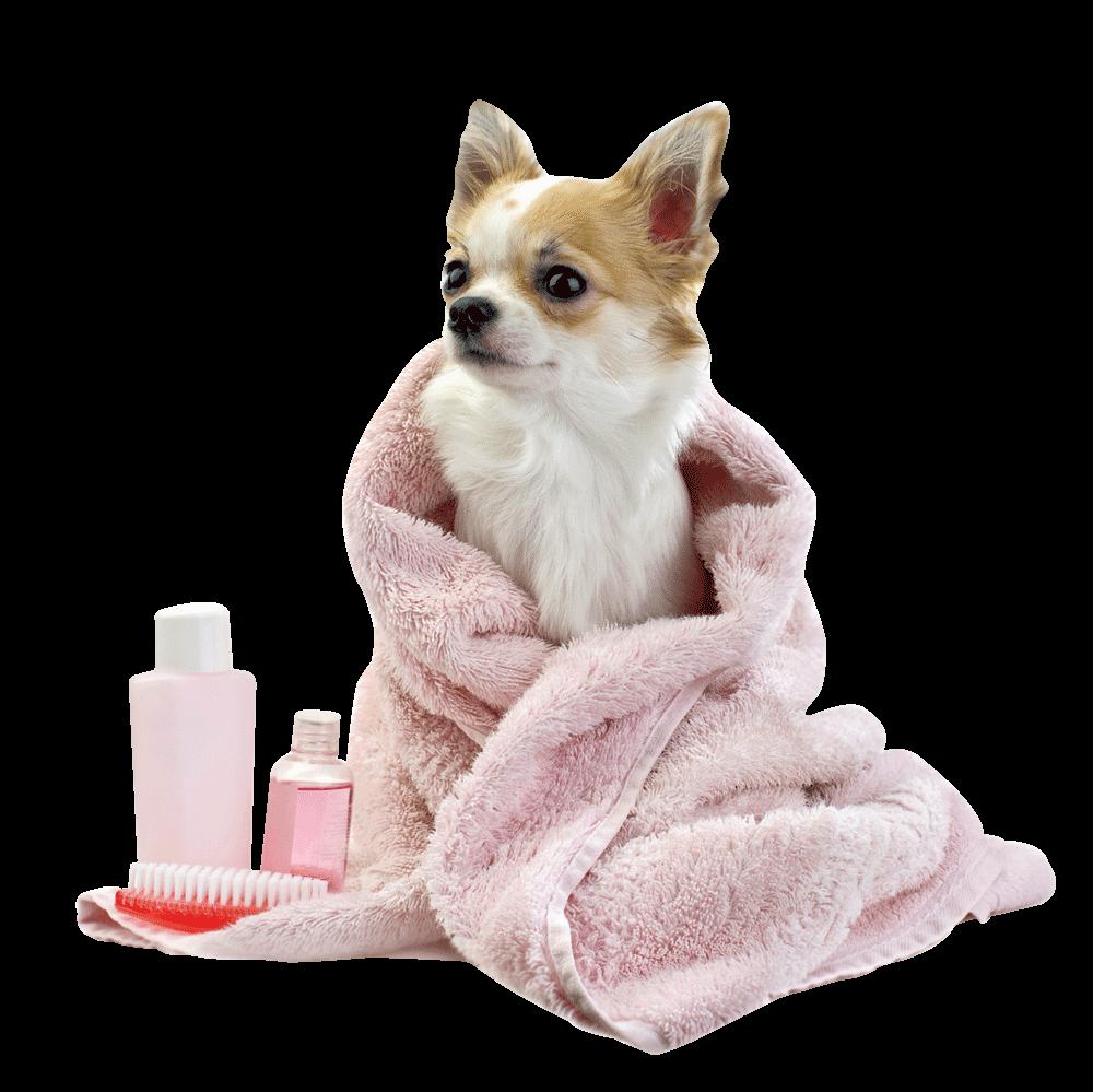 paws resort amp spa pet grooming bartlesville luxury